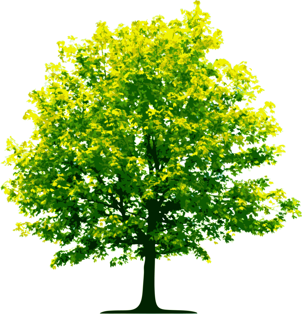 Full Green Tree